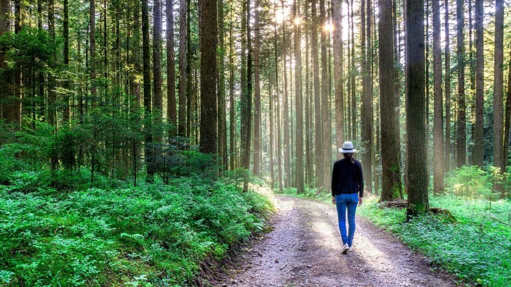 bain de forêt shinrin-yoku anti stress
