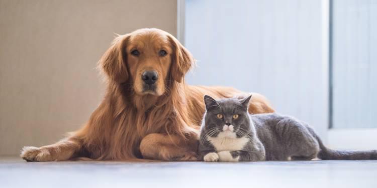 chien chat anti stress angoisse généralisée